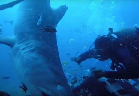 """【超恐怖】海底で """"人食いザメ"""" を撮影してるダイバー、今から・・・(動画あり)"""