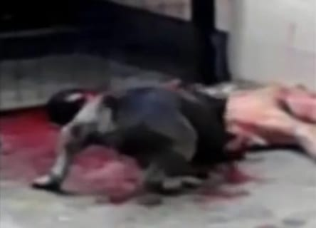 【閲覧注意】犬が人を殺してる映像で一番ヤバいのって100%コレだよな…