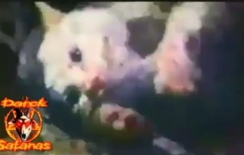 【閲覧注意】1000匹のネズミの中に1匹の猫を入れて戦わせるビデオってヤバかったよな