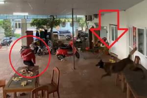 【衝撃映像】うちに強盗がやって来た時の「シェパード犬」が最強すぎた・・・