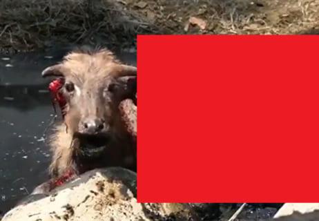 【閲覧注意】コモド島に住んでる全生物の「一番怖い死に方」がコレらしい…(動画あり)