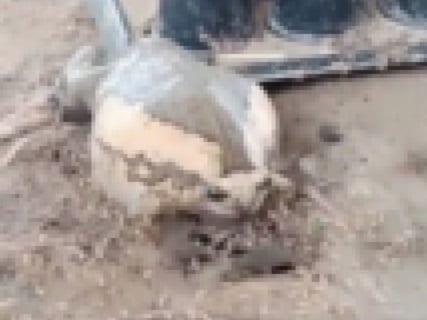 """【驚愕】エサが永久に出てくる """"穴"""" を見つけたカエル、とんでもない大きさになってしまう"""