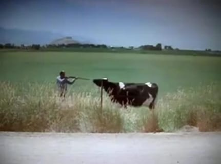 【衝撃映像】牛「どうせ今から殺されるんだ。1人ぐらい殺ってやる!」 ⇒ 結果