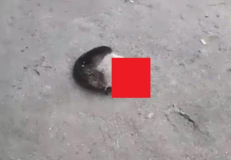 【閲覧注意】労働者さん、事故で「目と鼻の部分」しか残らなかった…(動画あり)