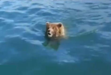 【衝撃】ボートに乗ってる男達に陸から襲い掛かるヒグマ。この後何が起こるか