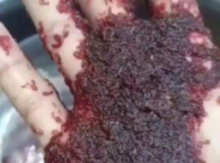 【閲覧注意】トライポフォビア(集合体恐怖症)の人が見たら死ぬ動画、これはアカン…