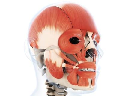 【閲覧注意】顔のココを切られると、人の顔は崩れ落ちるらしい・・・(画像あり)