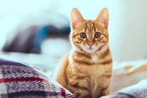 【衝撃映像】猫がこうなってたら、絶対に助けてはいけない理由