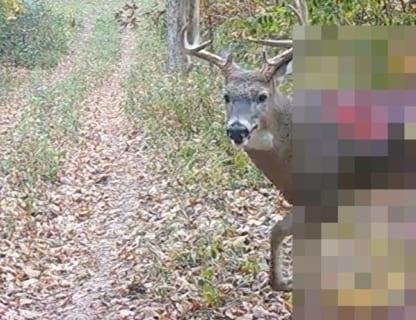 【閲覧注意】全米を震え上がらせている「ゾンビ鹿」、カメラに記録されたその姿がやばすぎた