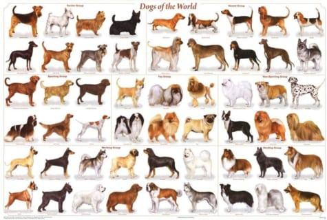【閲覧注意】世界で最も人を殺している犬、この犬種だった…(動画あり)