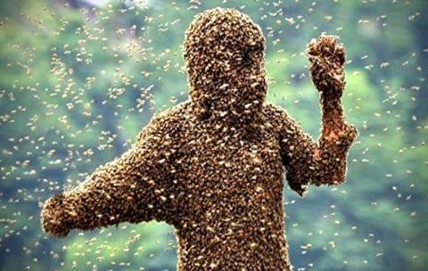【閲覧注意】数千匹のハチに1時間刺され続け死亡した女性。衝撃的な1枚の写真