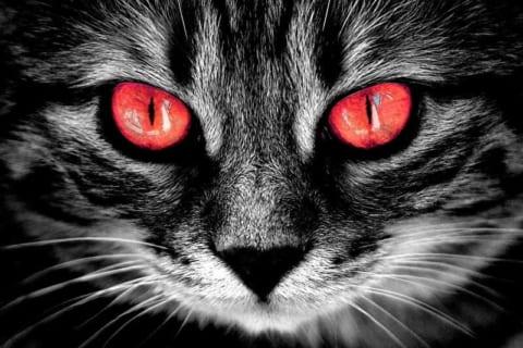 【超!閲覧注意】あなたが死んだ時、飼い猫が何をするか知ってますか?ヤバすぎる…