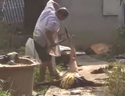 【閲覧注意】隣の家の障害者が庭でヤバい事やってる…これ見てくれ…(動画)