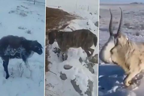 【動画】-51℃を記録したカザフスタン、全ての野生動物が凍り付く…!