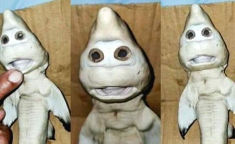 【閲覧注意】人面サメ、発見される。東南アジアの深海で・・・