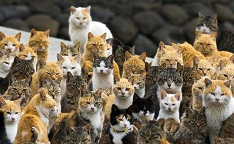 【超!閲覧注意】猫30匹を飼ってたおじさん、孤独死し食われ尽くす(画像あり)