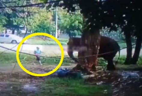 【閲覧注意】野生のゾウに餌をあげてはいけない理由