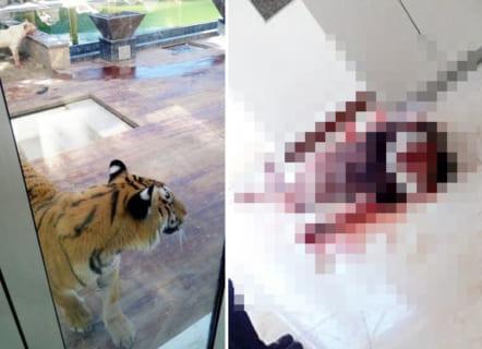 【閲覧注意】自宅で「ライオン」と「トラ」を放し飼いにしてたお金持ちの末路…(画像あり)