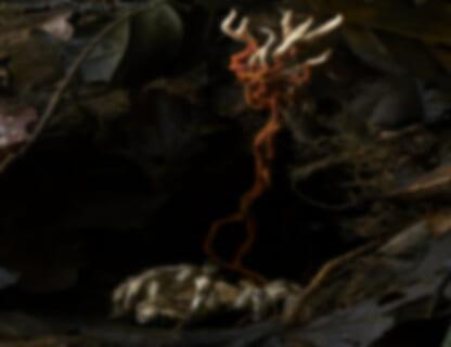 【閲覧注意】最も恐ろしい寄生虫に寄生されたタランチュラ、まるで芸術作品のようになる