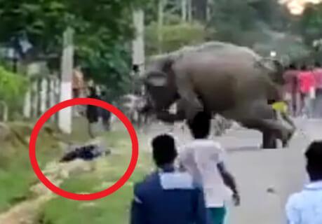 【衝撃映像】象が1人の人間を殺すのに、3秒もあれば充分らしい