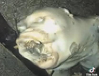 【地球外生命体】漁師さん、海で恐ろしい生物を発見してしまう・・・(動画あり)